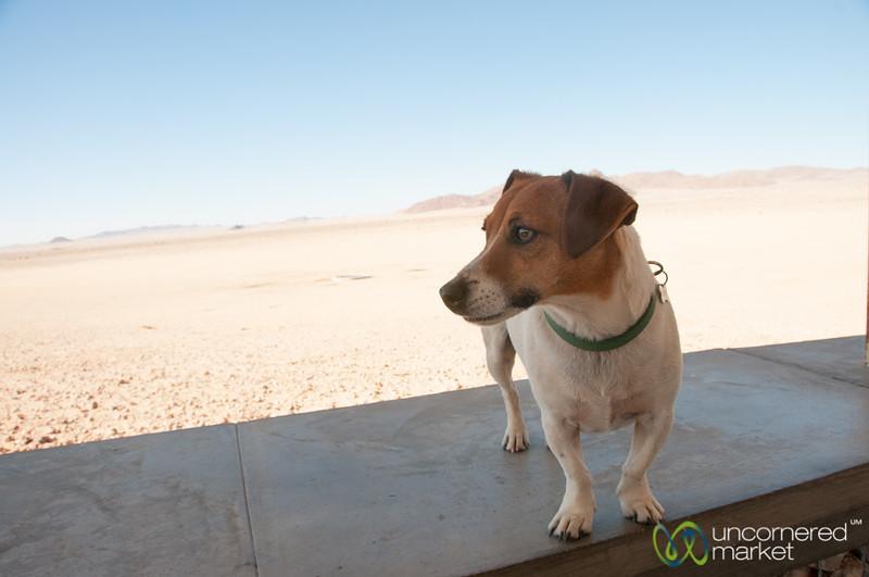 Mighty Dog - Aus, Namibia