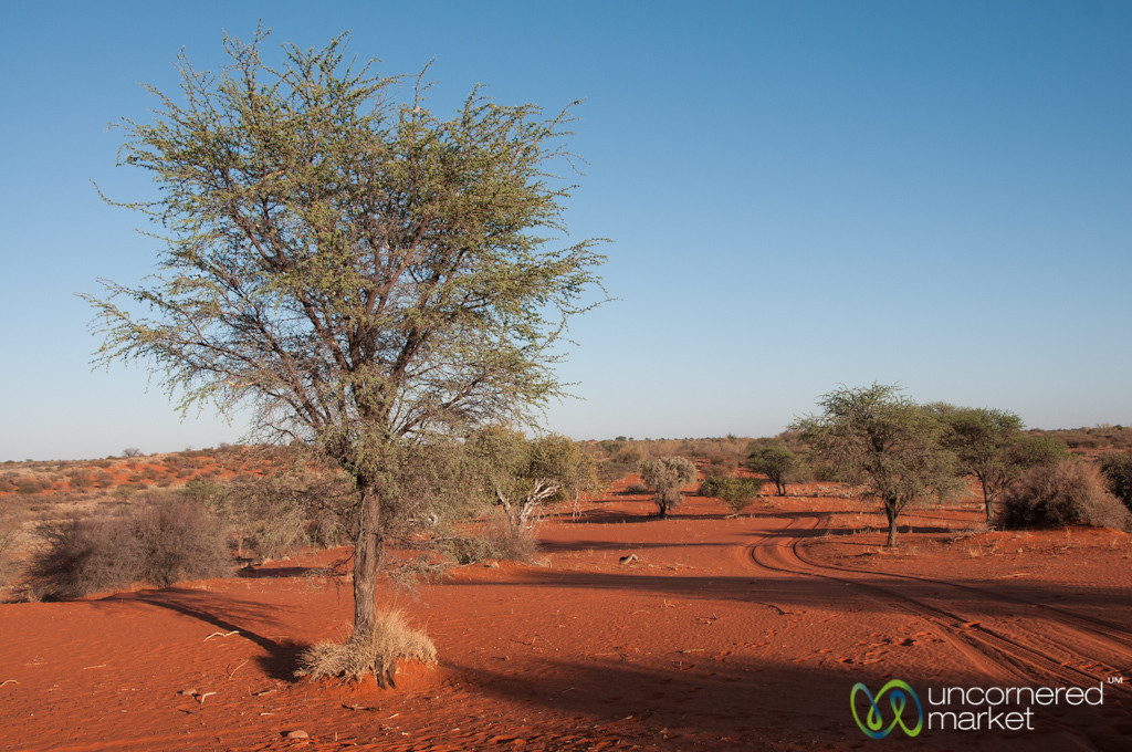 Road Through the Kalahari Desert - Namibia