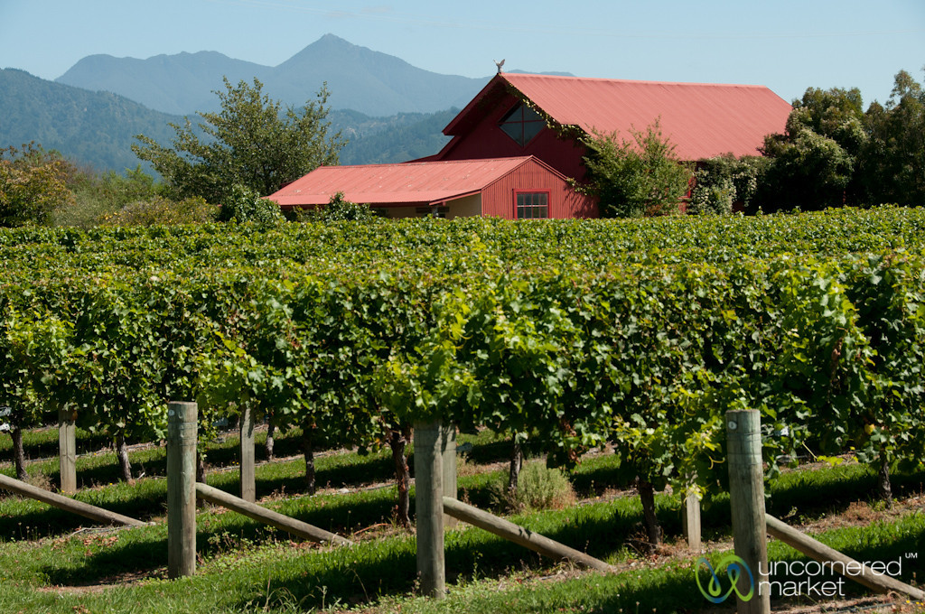 Marlborough Vineyards - New Zealand