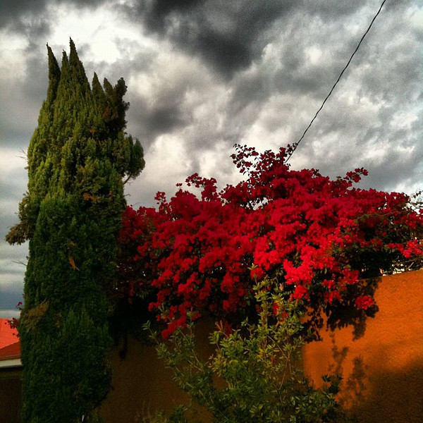 Just outside our door #Oaxaca #sky