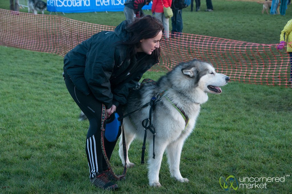Proud Husky at Dogmanay - Edinburgh, Scotland