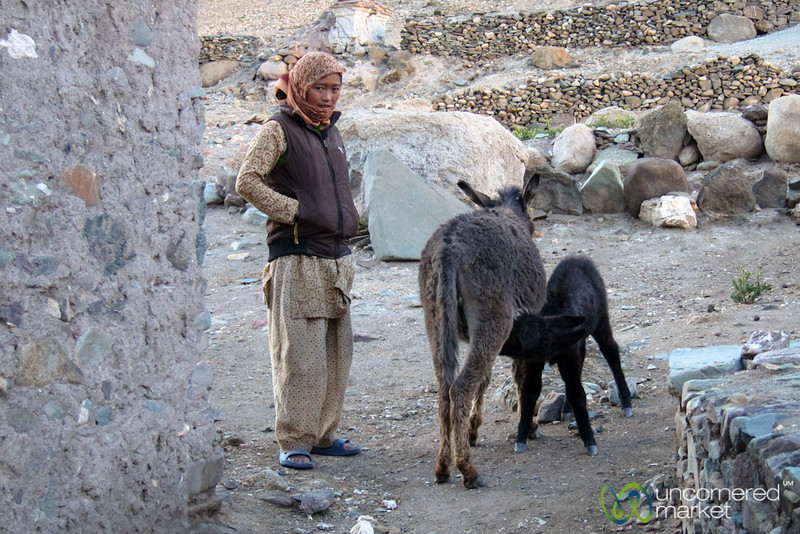 Baby Donkey and Ladakhi Woman - Hankar Village, Ladakh