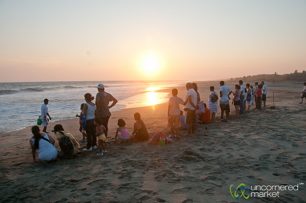 Lined up for Turtle Liberation - Playa La Ventanilla, Mexico