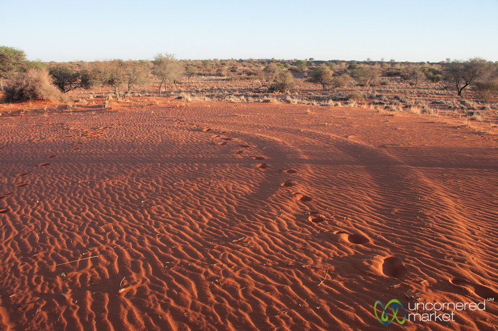 Early Morning Sun on Sands - Kalahari Desert, Namibia