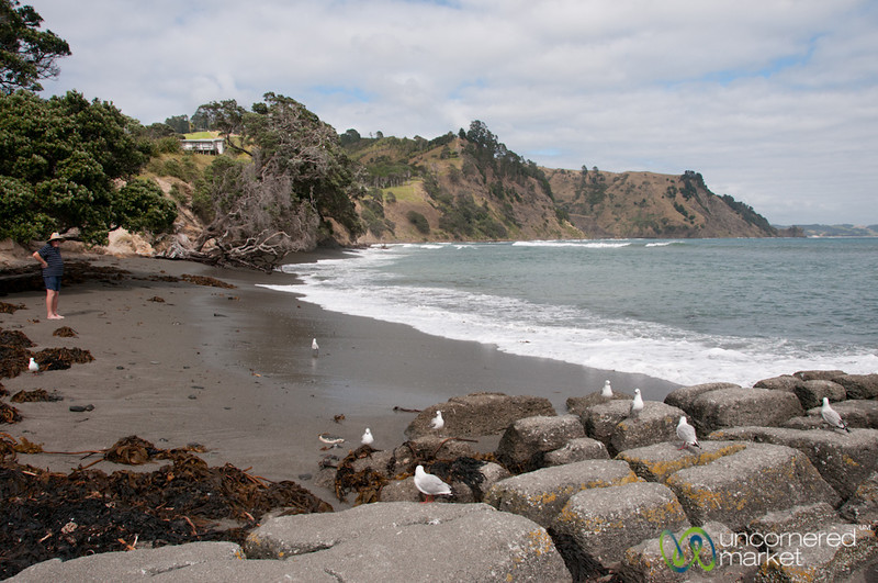 Goat Island, Northland Coastline - New Zealand