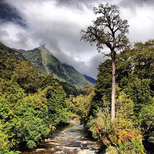 #Treeporn from a bridge, before our bush walk in Deep Cove, Doubtful Sound #newzealand