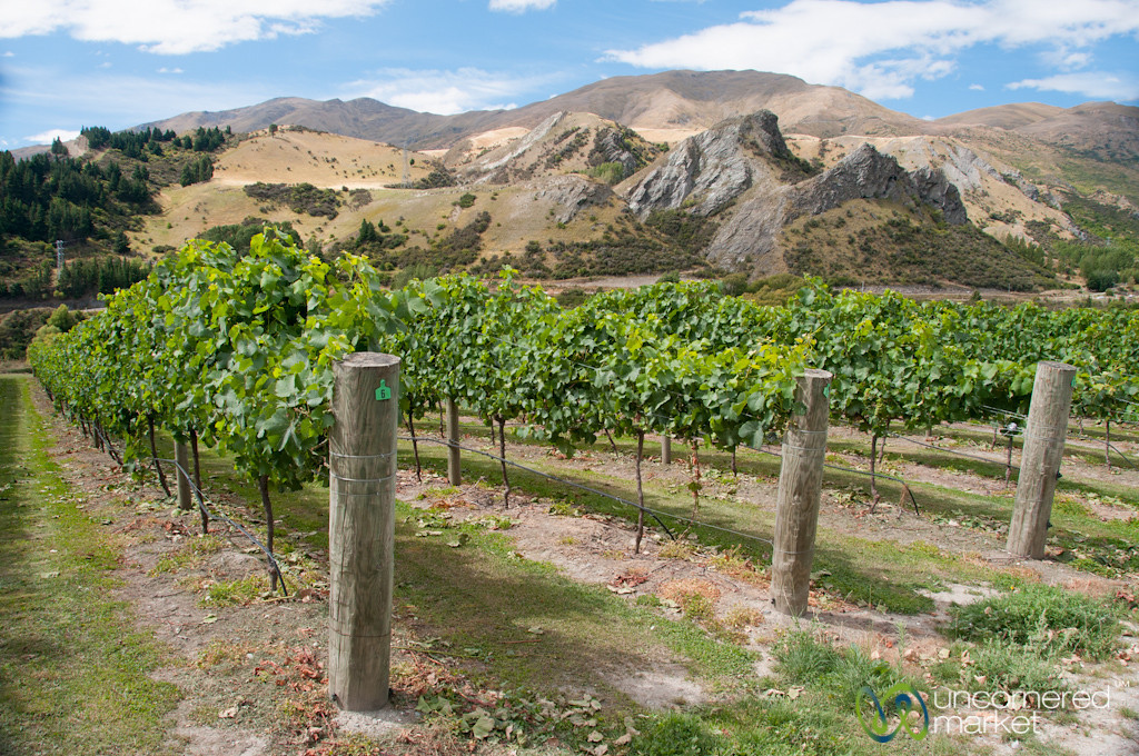 Chard Farm Vineyards Outside of Queenstown, New Zealand