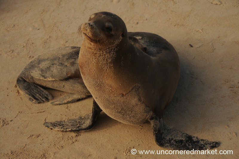 Mother and Baby Sea Lions - Galapagos Islands