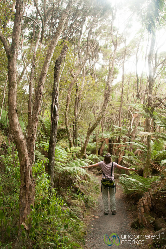 New Zealand Forests - Northland