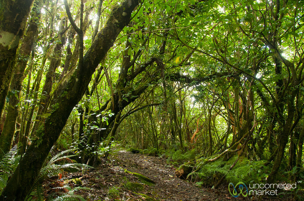 Trekking, Forests at Doubtful Sound - South Island, New Zealand