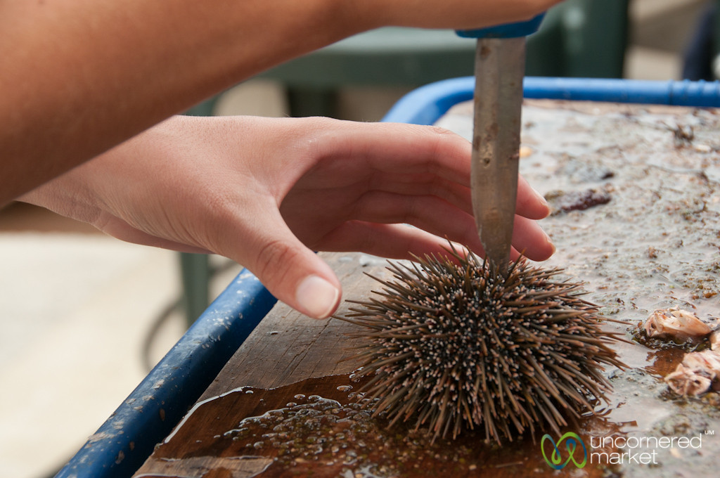 Eating Kina (Sea Urchin) in Bay of Islands - New Zealand