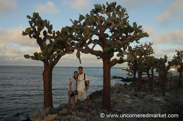 Under the Opuntia - Galapagos Islands