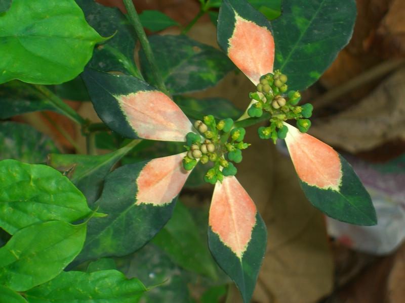 Unique Leaves - Ko Lanta, Thailand