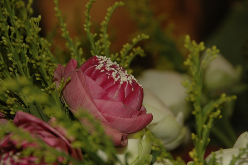 Lotus Flower - Krabi, Thailand