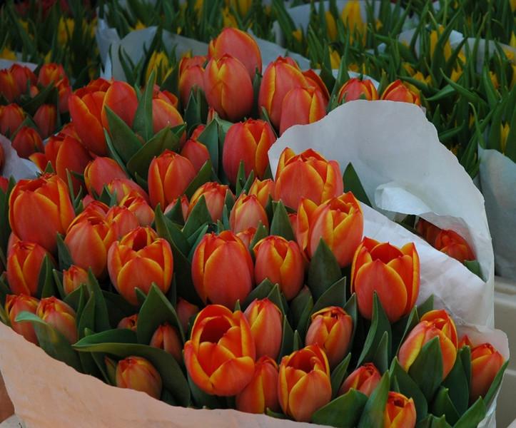 Tulips at the Naschmarkt - Vienna, Austria