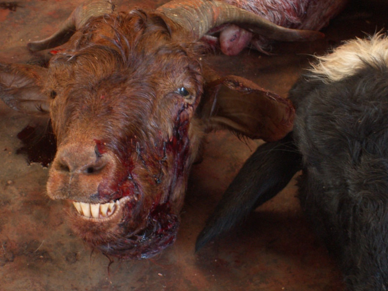 Goat Head at Osh Market, Kyrgyzstan