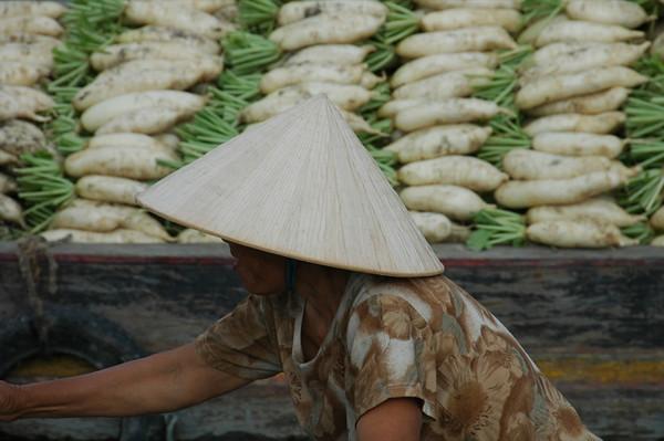 Turnips - Mekong Delta, Vietnam