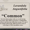 There a many different varieties of Lavender; many do better in different climate zones.  3 sample cards of the 13 species grown here.