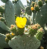 Cactus  growing is a nearby garden.