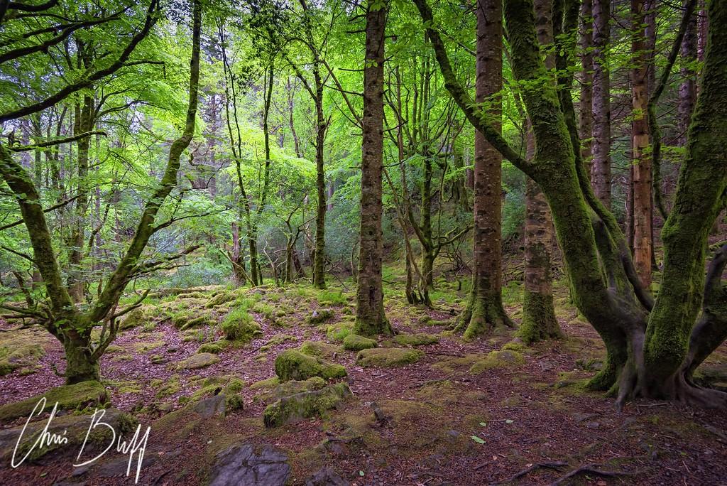 Enchanted Woods - 2017 Christopher Buff, www.Aviationbuff.com