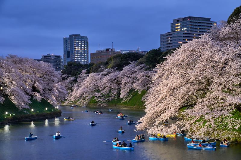 """Under the Bloom"" – Tokyo, Japan"