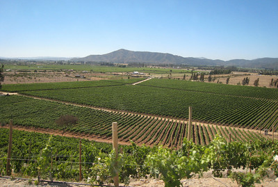 Indomita Vineyards, Casablanca Valley, Chile,