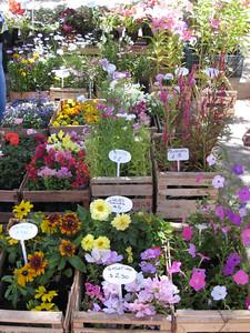flowers, market, El Bolson, Argentina.