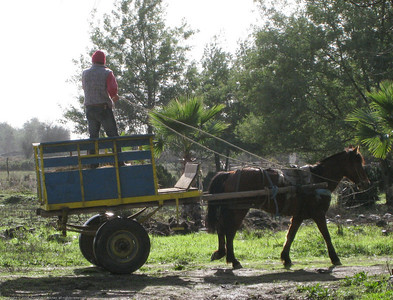 Although Chile is basically fully developed, most of the growth has come in the last 50 years. Consequently there are many holdovers from previous eras, horse power being one of them. Horse drawn carts are very, very common in the rural and agricultural areas of the country.