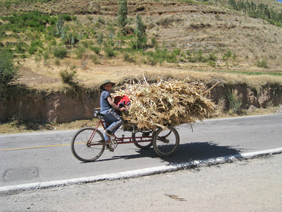Local boy with load of corn stalks. On the road in Peru.