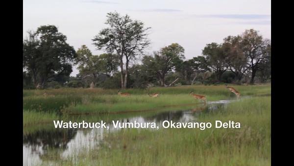 Africa 2016 videos & slideshows