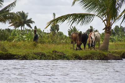 farmers along pangalane's canal