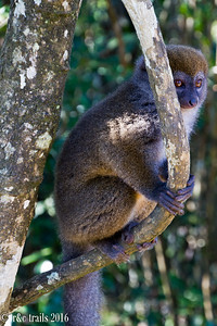 @ Vakona, a private reserve, the bamboo lemurs aren't as elusive