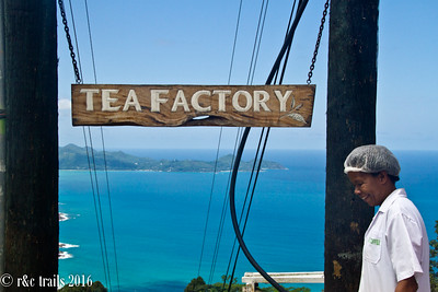 the lovely view at the seychelles tea factory