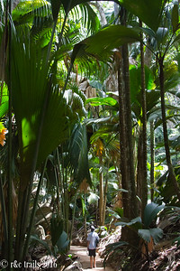Vallee de Mai Reserve, like walking into Jurassic Park