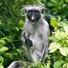 @ jozani forest