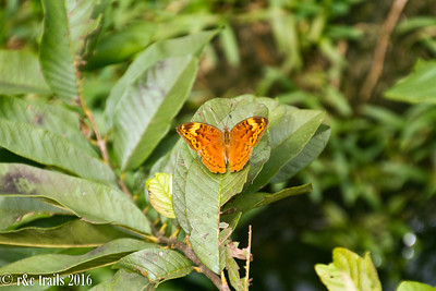 a butterfly at zala park