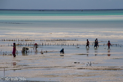 kids play with their boats and ladies farm seaweed as the tide goes out
