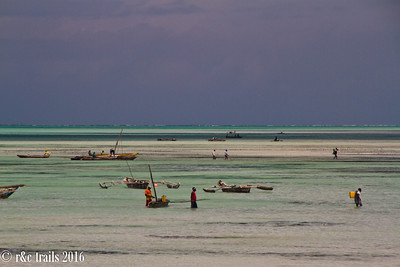 activity at low tide on jambiani beach