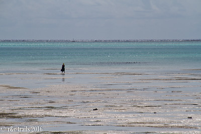 a lady heads out to sea as the tide goes out