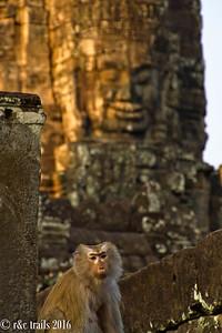 monkey at Bayon