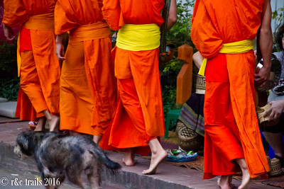 the monks and their temple dog