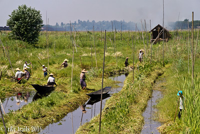 workers tending to more floating gardens