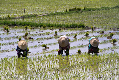 lady workers in the adjoining field