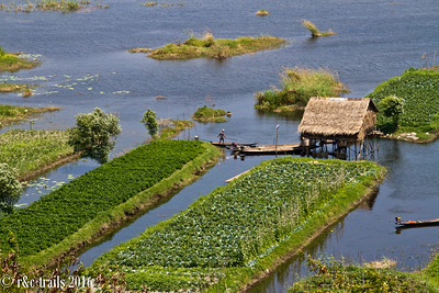 a man tending to floating gardens on inle lake