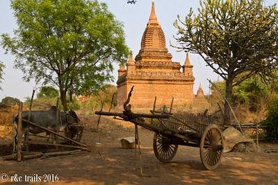 an ox and his cart at temple grounds