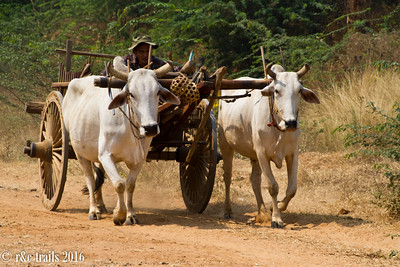 a common form of transportation in this country
