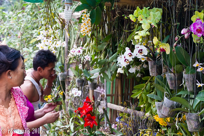 orchid stand at Hnee Paya