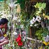 orchid stand at Hnee Paya