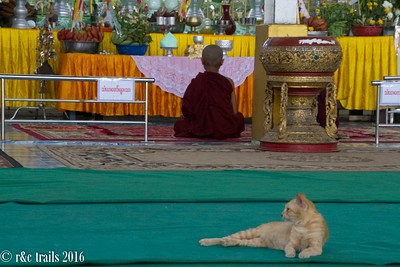 a cat guards the temple as a monk prays