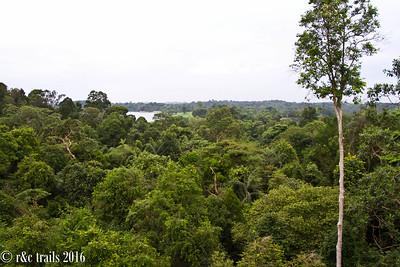 canopy views